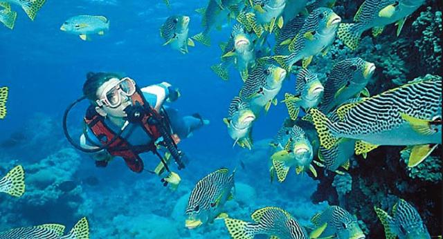 Snorkeling in Montego Bay Jamaica