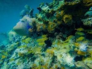 snorkeling in Ocho Rios
